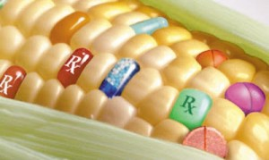 Corn pharma